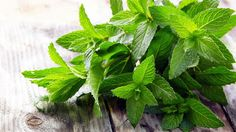 Relieve It With A Herb: Peppermint For Irritable Bowel Syndrome