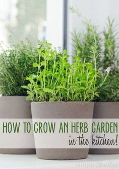 Easy start to an indoor herb garden indoor herbs herbs and herbs here are 5 ways to start an herb garden in your kitchen no backyard needed workwithnaturefo