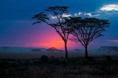 Beautiful sunset in Serengeti - Imgur