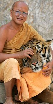 Tiger Temple in Thailand-- definite bucket list!