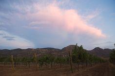 Vinos mexicanos y vinicolas de Mexico: A descubrir la zona vinicola de Coahuila