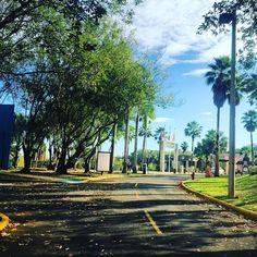 """Early Morning Walk || #puertorico #bayamon #interamericana #morning #view #visitpuertorico #campus #green #cardio #msstudent #tropical #trees #explorandopr"""