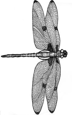 Dragonfly-illustration.jpg black & white.