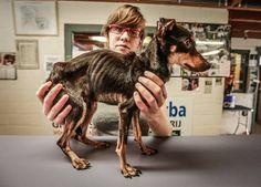 LPS,Uitgehongerd hondje Milo overleden , HLN.be (20/09/14) REGIONAAL