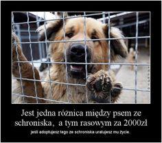 Jaka jest różnica pomiędzy psem ze schroniska, a psem rasowym za 2000 pln? Big Dogs, True Stories, Pet Adoption, Horses, Humor, Pets, Funny, Quotes, Animals