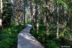 torfowisko Tarnawa bagienny bór sosnowy