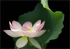 「flower arrangement photography」の画像検索結果