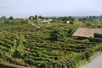 vineyards in Sicily. They love their wine
