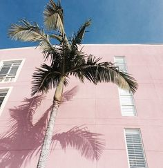 Palms and pink.