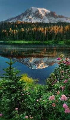 Mountains trees greeneey flowers reflection