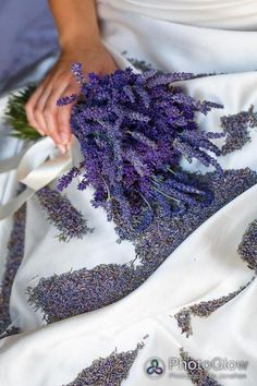 These are the lavender plants that I will use for potpourri......