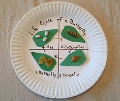 Butterfly Life Cycle Plate Craft