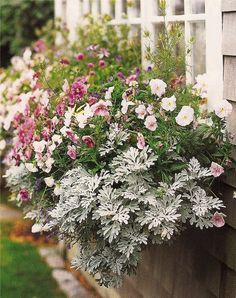 urns filled with flowers and herbs well-attended window boxes. English Cottage Garden, Flower Pots, Beautiful Gardens, Flowers, Container Plants, Garden Containers, Cottage Garden, Window Box Flowers, Plants