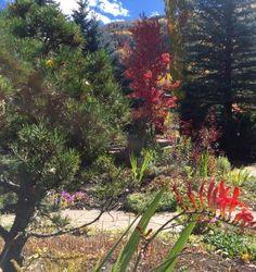 Photo of Betty Ford Alpine Gardens