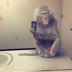 Animais silvestres tirando selfie