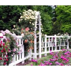 Beautiful garden & roses