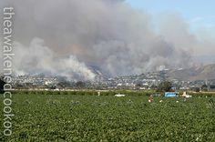 Ventura Brush Fire (November 2005)