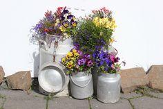Milchkanne im Garten verwenden Fiber Rich Foods, Milk Cans, Hydrangea, Shrubs, Indoor Outdoor, Planter Pots, Floral Wreath, Home And Garden, Canning