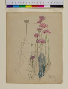 "1926 Vintage WILD FLOWER /""RHODODENDRON/"" GORGEOUS COLOR Art Lithograph"