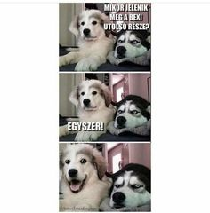 62 Ideas funny memes sarcastic laughing grumpy cat for 2019 Husky Humor, Funny Husky Meme, Funny Dog Captions, Dog Quotes Funny, Funny Memes About Life, Funny Jokes To Tell, Funny Puns, Dad Humor, Life Humor
