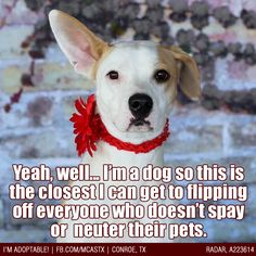 A public service announcement from the shelter dogs ;) #spay #neuter