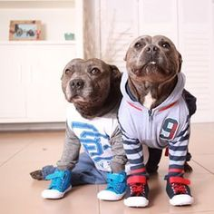 Look at you in your sports outfits! GO TEAM! | These Pit Bull Brothers Are Taking Over Instagram