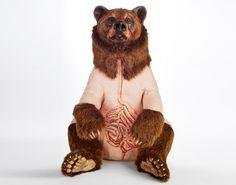 deborah simon bears