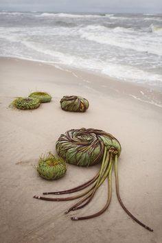 woven seaweed ocean earthworks summer nature land art weaving , what to do on your holidays Land Art, Art Et Nature, Instalation Art, Ephemeral Art, Arte Floral, Environmental Art, Outdoor Art, Pics Art, Art Plastique