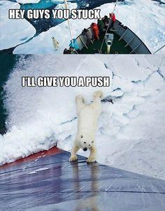 Hey guys, you stuck? Polar Bear helps push a ship out of the ice.