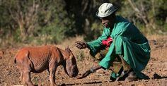 Nairobi Animal Orphanage   #Nairobi City