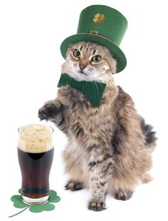 This Kitten Who's Gonna Need Another Guinness