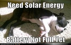 Need Solar Energy,  Battery Not Full Yet...this is exactly what my dog does haha