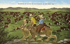 vintage jackelope postcard.