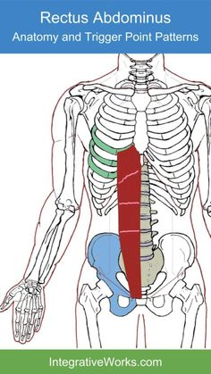 Trigger Points – Wide Band of Pain Across the Top of the HipsIntegrative Works   Integrative Works