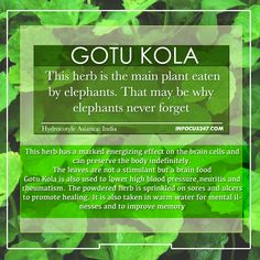 gotu kola benefits - Google Search Nutrition Guide, Health And Nutrition, Health And Wellness, Health Tips, Health Foods, Healing Herbs, Holistic Healing, Natural Healing, Healthy Mind And Body
