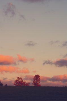 trees. sky. clouds. ocean. sea. autumn. fall
