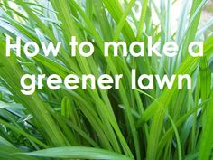 How do you achieve a beautiful, lush green, lawn? Here's your answer. #lawncare