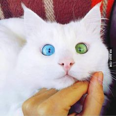 Those eyes tho