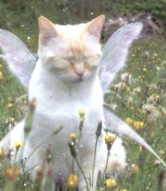 Cat Aesthetic, Nature Aesthetic, Pretty Cats, Cute Cats, Forest Fairy, Cute Little Animals, Faeries, Aesthetic Pictures, Funny Animals