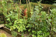 Fèves mélangées à d'autres légumes en début d'été
