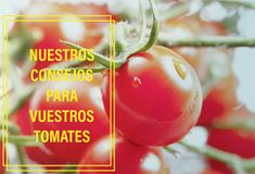 Vegetables, Fruit, Food, Garden Centre, Growing Up, Vegetable Garden, Terrace, Tips, Tomatoes