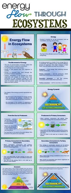 Introductory PPt about the flow of energy in an ecosystem including the energy pyramid, producers, primary consumers, secondary consumers, and tertiary consumers. Great addition to an ecosystems unit.