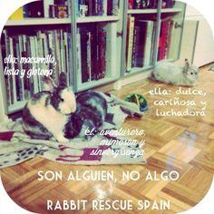 Los conejos son maravillosos seres individuales con identidad propia. Disfrutales. Quiereles. Cuidales. Si los encierras en una jaula, #teloestasperdiendotodo