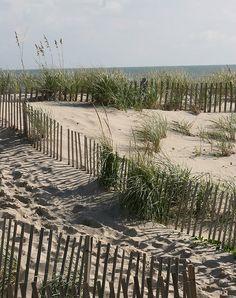 Dunes, Hatteras Island #dunes #hatteras