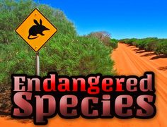 FREE Teaching resources for 7-11 year olds: What is an Endangered Species? This activity challenges students to think about what it means to be an endangered species and what causes a species to become endangered.