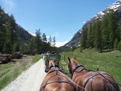 Do you know during a day on the Bernina Express you can have a ride on Val Roseg? Book this experience with MilanoArte. Bernina Express, Northern Italy, Lake Como, Horse Riding, Tour Guide, Alps, Day Trips, The Locals, Switzerland