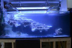 Saltwater Aquarium Setup, Aquarium Sump, Diy Aquarium, Aquarium Design, Saltwater Tank, Planted Aquarium, Reef Aquascaping, Tropical Fish Tanks, English Interior