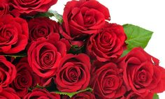 Rose Day 2015 Wishes,images, Happy Rose day 2015 wishes,Happy Rose day 2015 Images,Happy Rose day 2015 Hd images,Happy Rose day 2015 love wishes