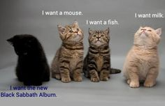 Not All Kittens Are The Same