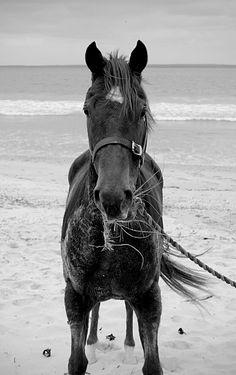Equine-photography-4